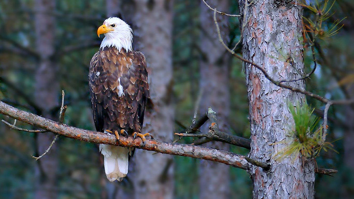 America's Top 10 Federal Conservation Laws for the Protection, Preservation and Enhancement of Wildlife and Wild Places