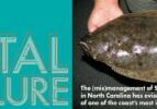 Mis-Mangement of Souther Flounder in North Carolina