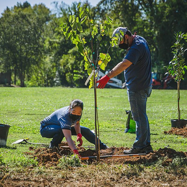 Trees Planted by Volunteers