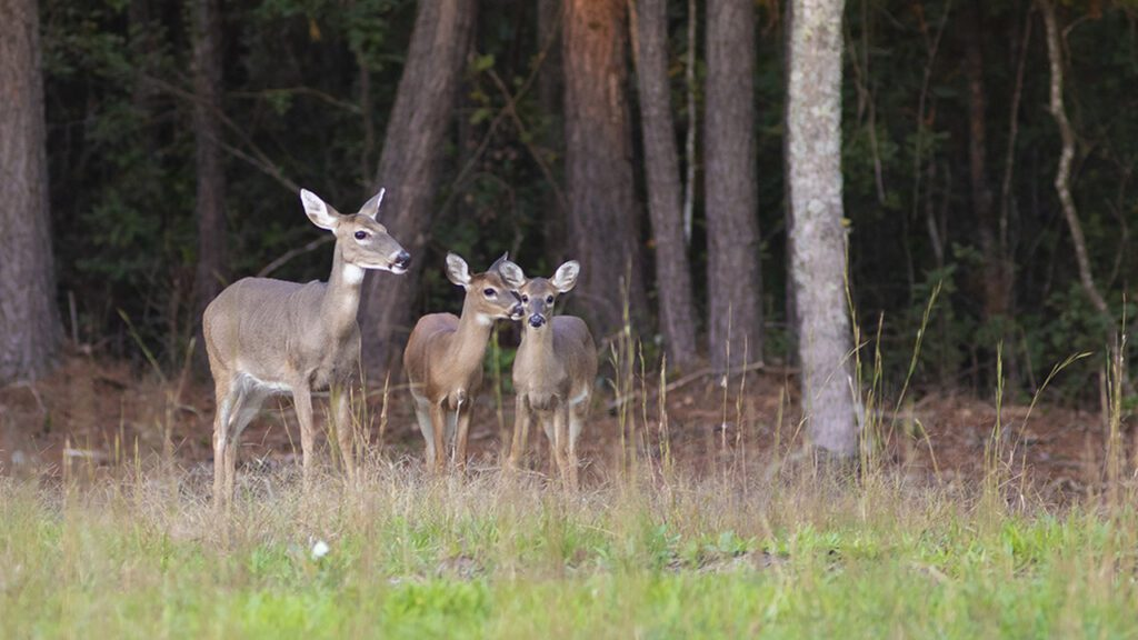 Farmers and Communities Manage Deer