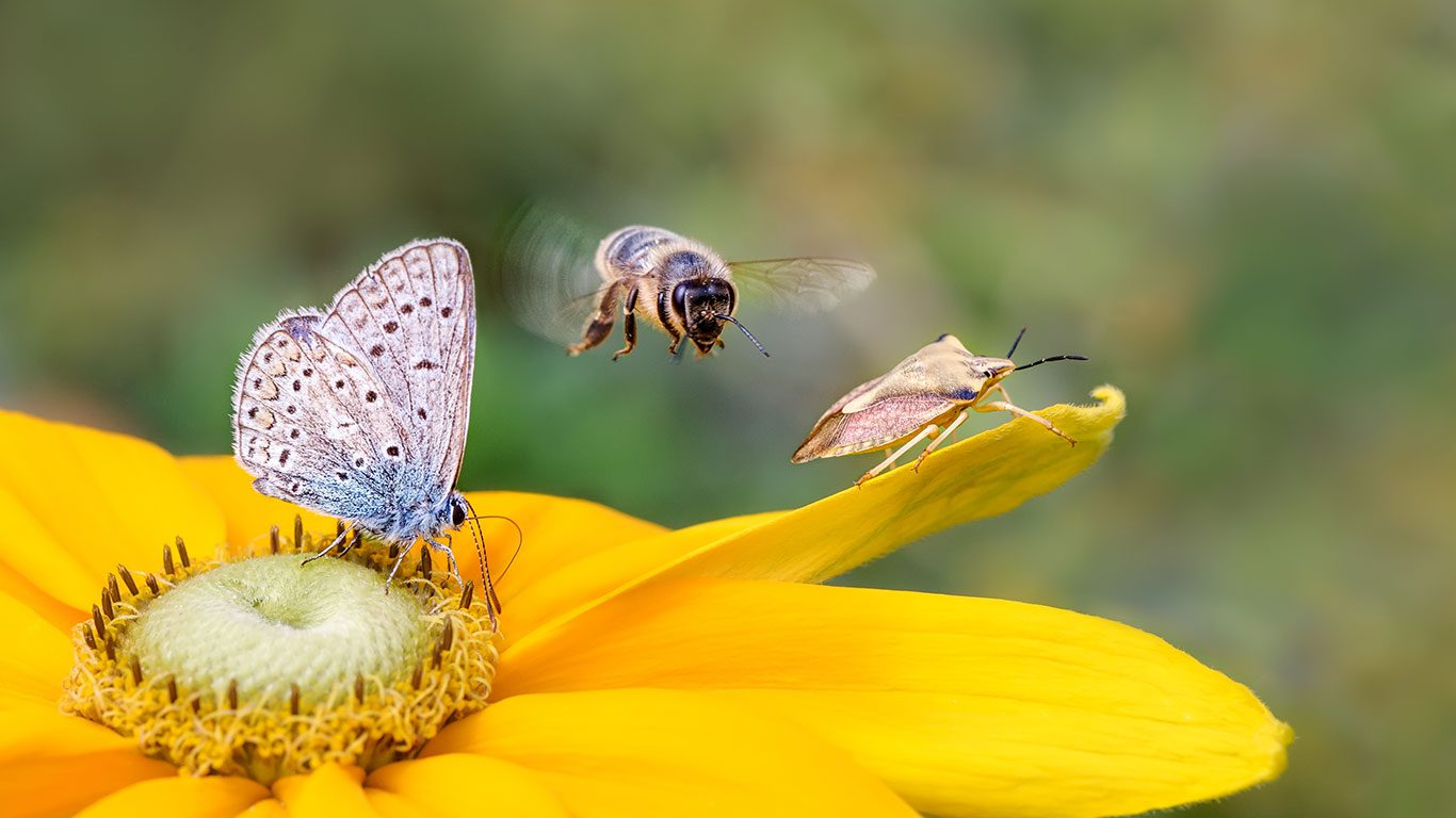 NC Pollinator Conservation Alliance