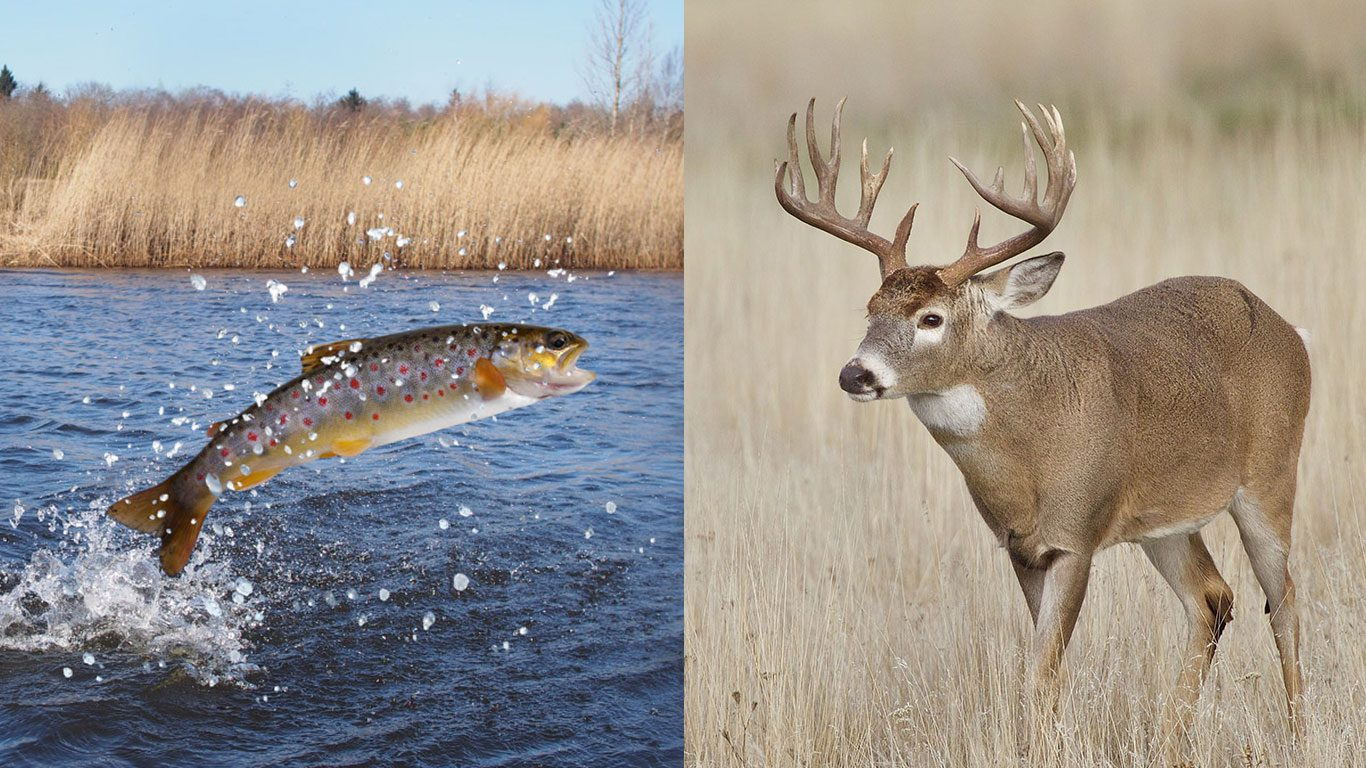 NC needs a united fish and wildlife agency.